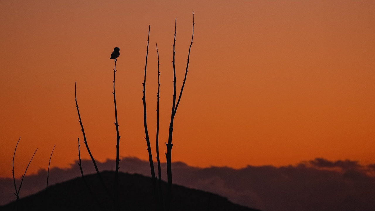 canon-eos-owl-on-tree-top-dusk-4446997930377716.jpg