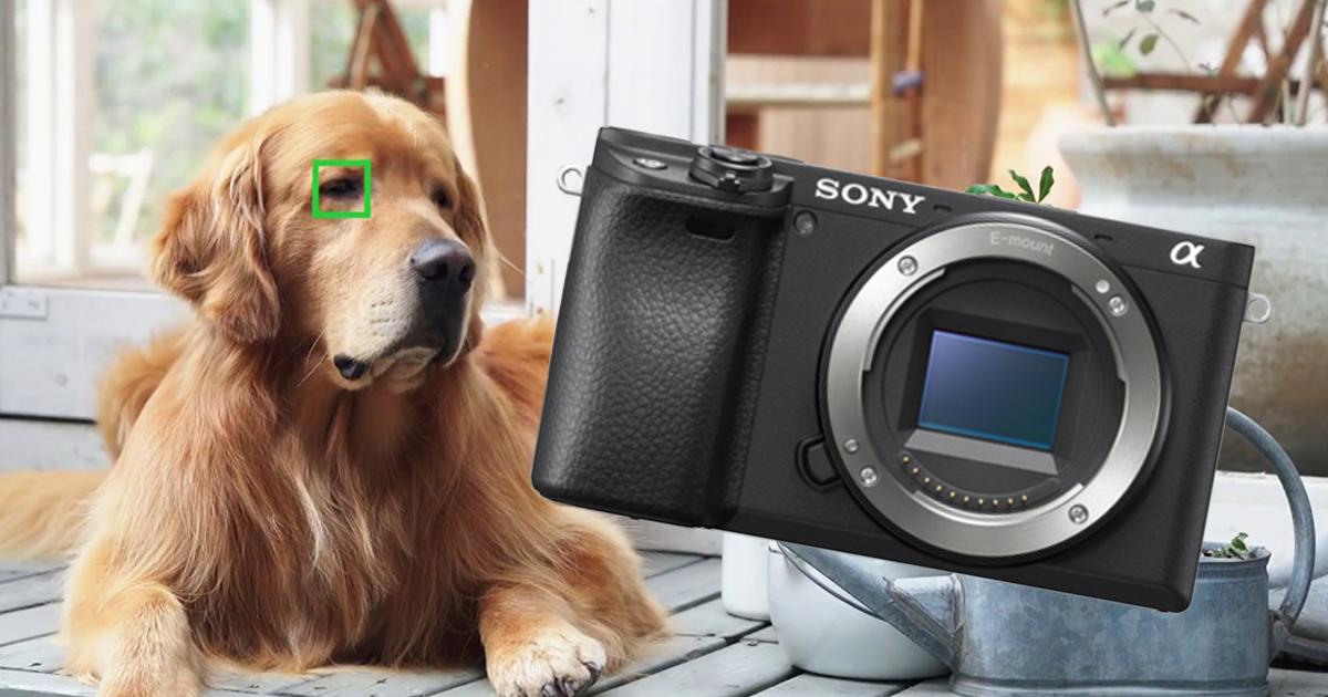 Sony-A6400-firmware-2.0-vignetteFB.jpg