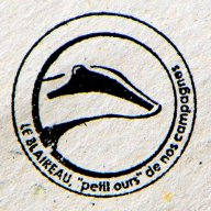 muscardinus